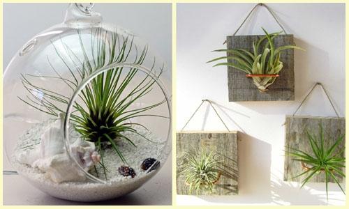 Plantas Ideais para Ter Dentro de Casa (1)