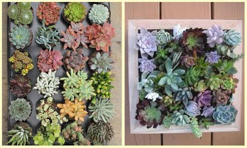 Plantas Ideais para Ter Dentro de Casa (3)