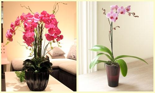 Plantas Ideais para Ter Dentro de Casa (5)